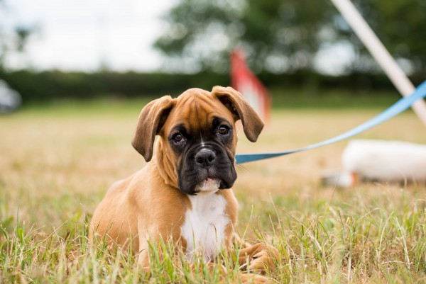 Puppy/ Beginner Online Course