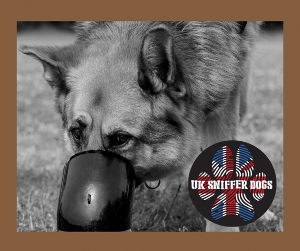 Bronze Online Scent Detection Course from UK Sniffer Dogs