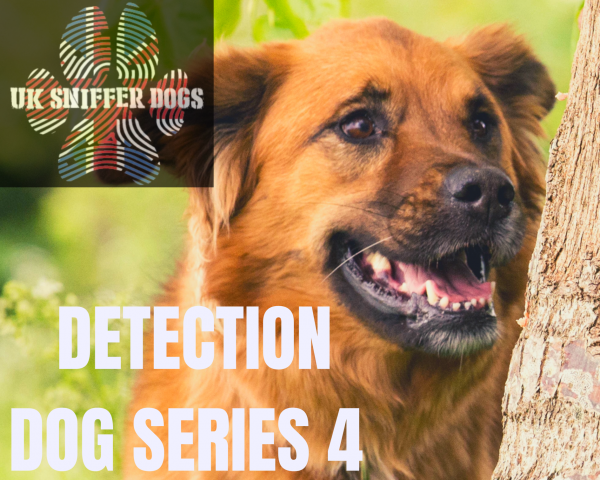 UK SNIFFER DOGS Detection Dog Series 4