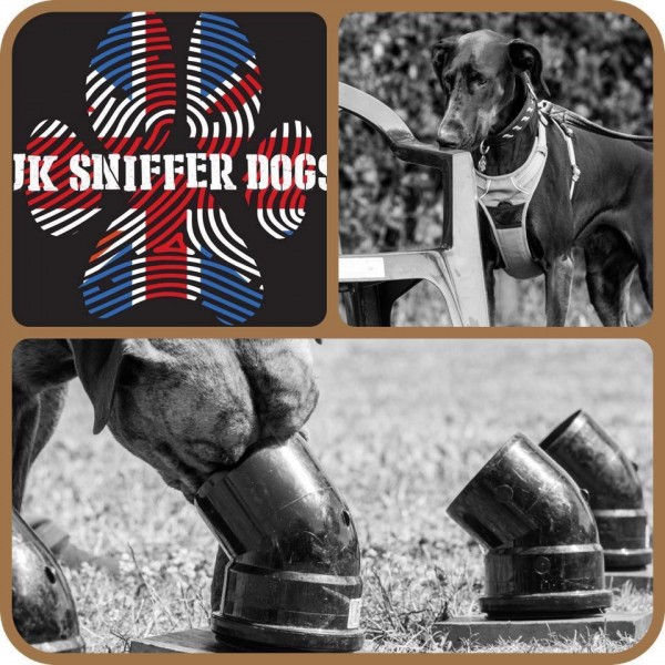 UK SNIFFER DOGS CWDT