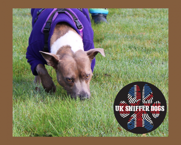 Bronze Online Tracking Course from UK Sniffer Dogs